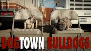 French Bulldog Kennel - Dogtown Bulldogs