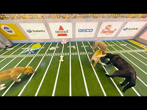 Highlight Reel | Puppy Bowl XII (360 Video)