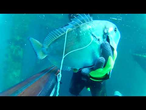 Spearfishing 2018, Ivica Smolić-Alžir