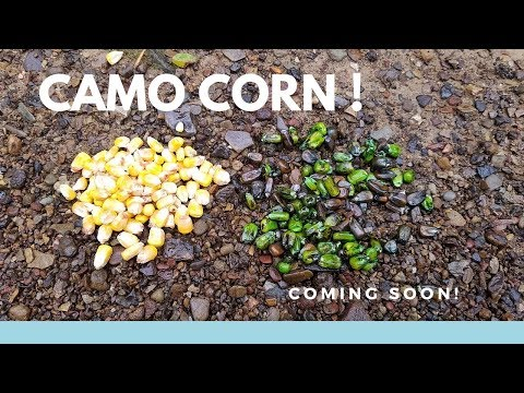 Camo Corn For Deer Hunting