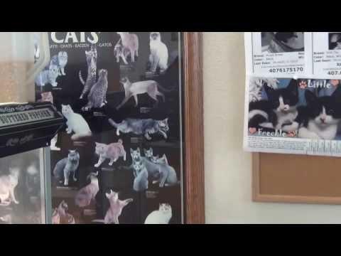 АМЕРИКА Ветеринарная КЛИНИКА - удаление опухоли НИКИ 16.10.2013