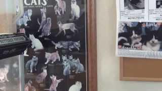 АМЕРИКА Ветеринарная КЛИНИКА - удаление опухоли НИКИ 16.10.2013(МОЙ PayPal - blacksea57@mail.ru ЯЛТА 2011 - 2012 - http://www.youtube.com/playlist?list=PLB5C0FF66D403511F И СМЕХ И ГРЕХ ..., 2013-10-17T14:01:43.000Z)