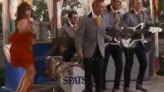The Spats - She Kissed Me Last Night (T.V. cameo, frat rock)