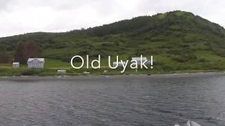 Old Uyak 2017