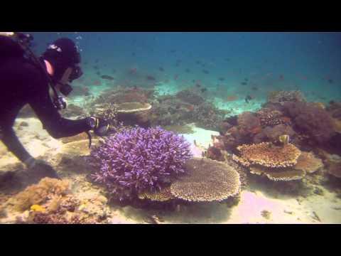 Collecting Corals For The Steinhart Aquarium