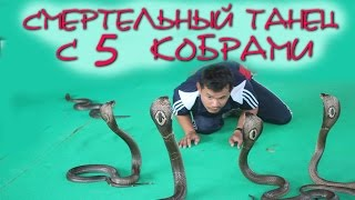 Смертельный танец с 5 ядовитыми кобрами. Потрясающе опасное шоу со змеями. Таиланд