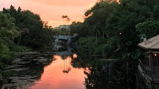 Day 2 Disney world vlog Animal Kingdom: PANDORA , florida 2017