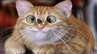 Топ 5 видео о домашних животных бульдогсила