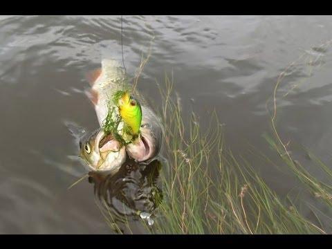 Ловля голавля, ловля голавля на мушку, хорошая рыбалка - YouTube