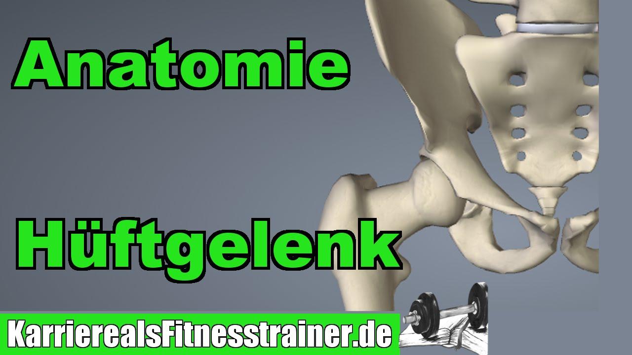 Anatomie Hüftgelenk - Wichtig für B-Lizenz Prüfung! - YouTube