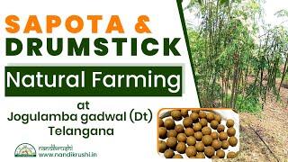 Sapota & Drumstick Natural farming at #Ieeja (Mandal),#jogulambagadwal (District), #Telangana