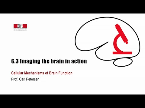6.3 Imaging the brain in action