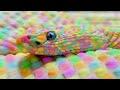 10 Serpentes Exóticas Que São Únicas No Mundo