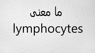 ما معنى lymphocytes
