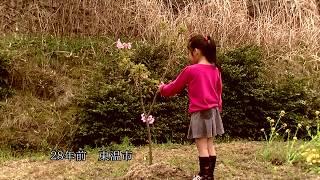 映画 「陽光の木の下で (Under The Tree Of Yoko Cherry Blossom)」 予告篇 (高画質) 2017年 第四回新人監督映画祭・招聘部門上映作品 吉田亜咲 動画 22