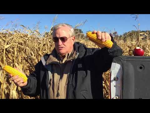"""Field Trial on """"Satisfy"""" - For Dr. Woodward"""