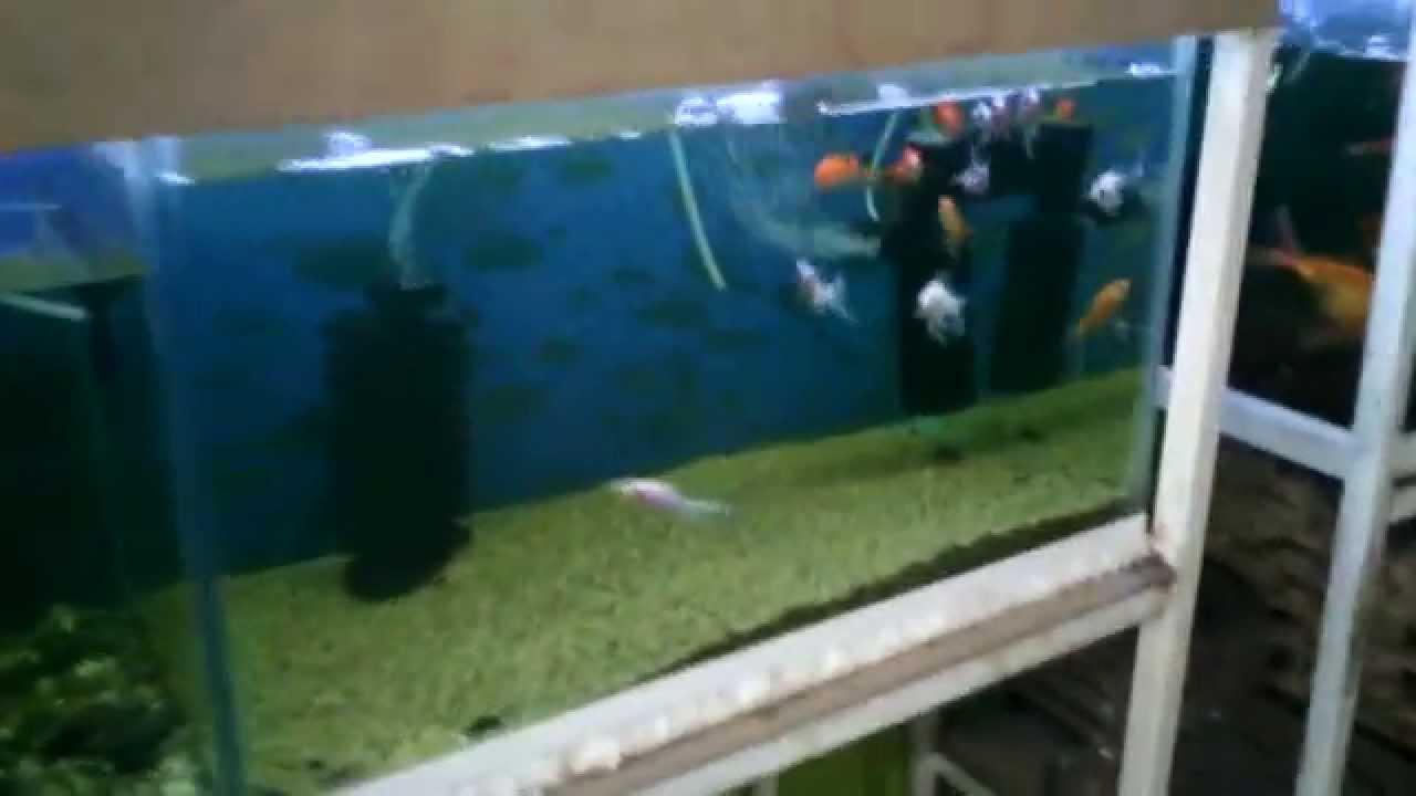 Variedad de peces v youtube for Variedad de peces