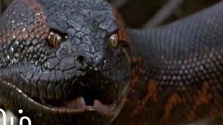 Anakonda 2 Bolum 8 (1997)