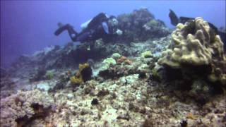 Diving at Apo Island