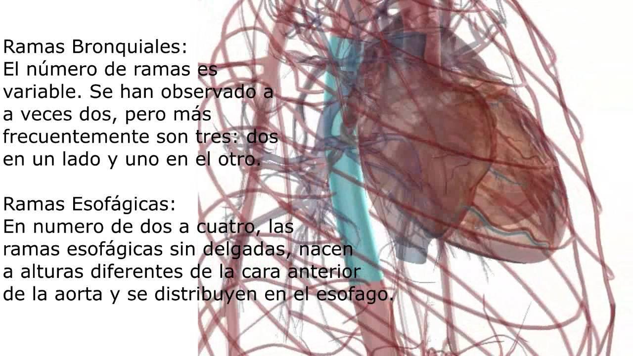 Aorta toracica - YouTube