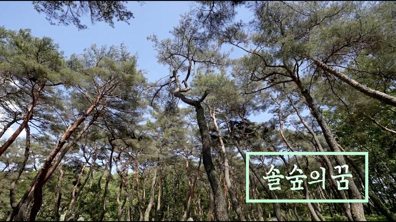 [위대한100경] '거창동호숲' 숲속의 꿈