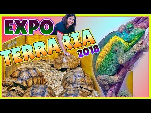 EXPOTERRARIA 2018 Barcelona