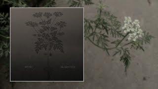 Spurv — Skarntyde [Full Album]