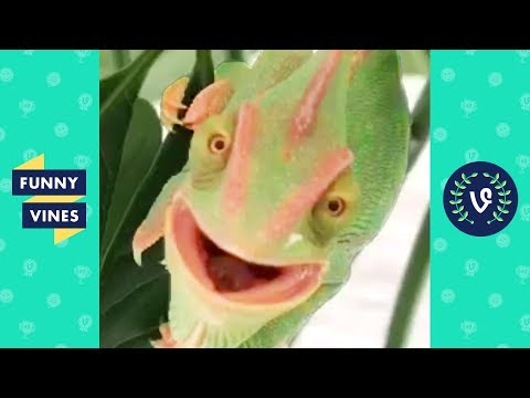 TRY NOT TO LAUGH - Cute Funny Animals!