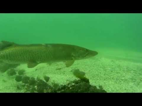 Niagara River drift dive