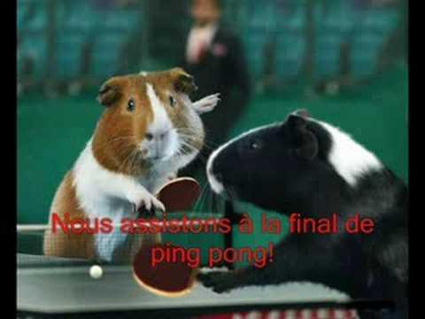 Les cochon d 39 inde au jeux olympique youtube - Queue de cochon outil ...