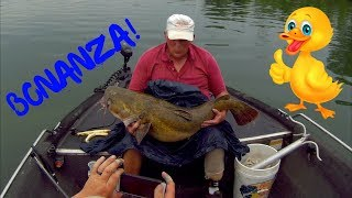 Giant Flathead Bonanza!!!
