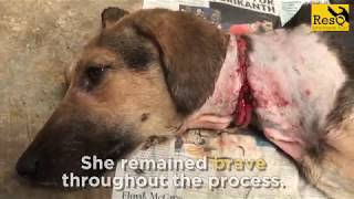 Dog rescued with a metal wire cutting through her neck!