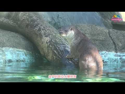 金門城隍季辦在動物園?民俗文化結合生態保育