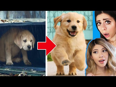 unbelievable-homeless-animal-rescue-transformations!-🐶-w/-azzyland