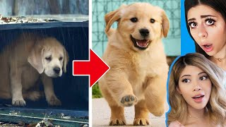 Unbelievable Homeless Animal Rescue Transformations!  🐶 w/ Azzyland
