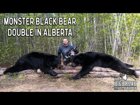 Monster Black Bear Double in Alberta