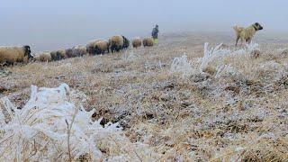 Kadırga yaylası,Davunlu obası 2017 yılı muhteşem koyun göçü yolculuğu