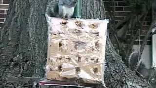Squirrel Speaks Out!! [backyard Bag Feeder Project]