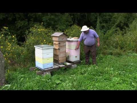 BeeVangelists Bee Keeping Through the Years (part 2)