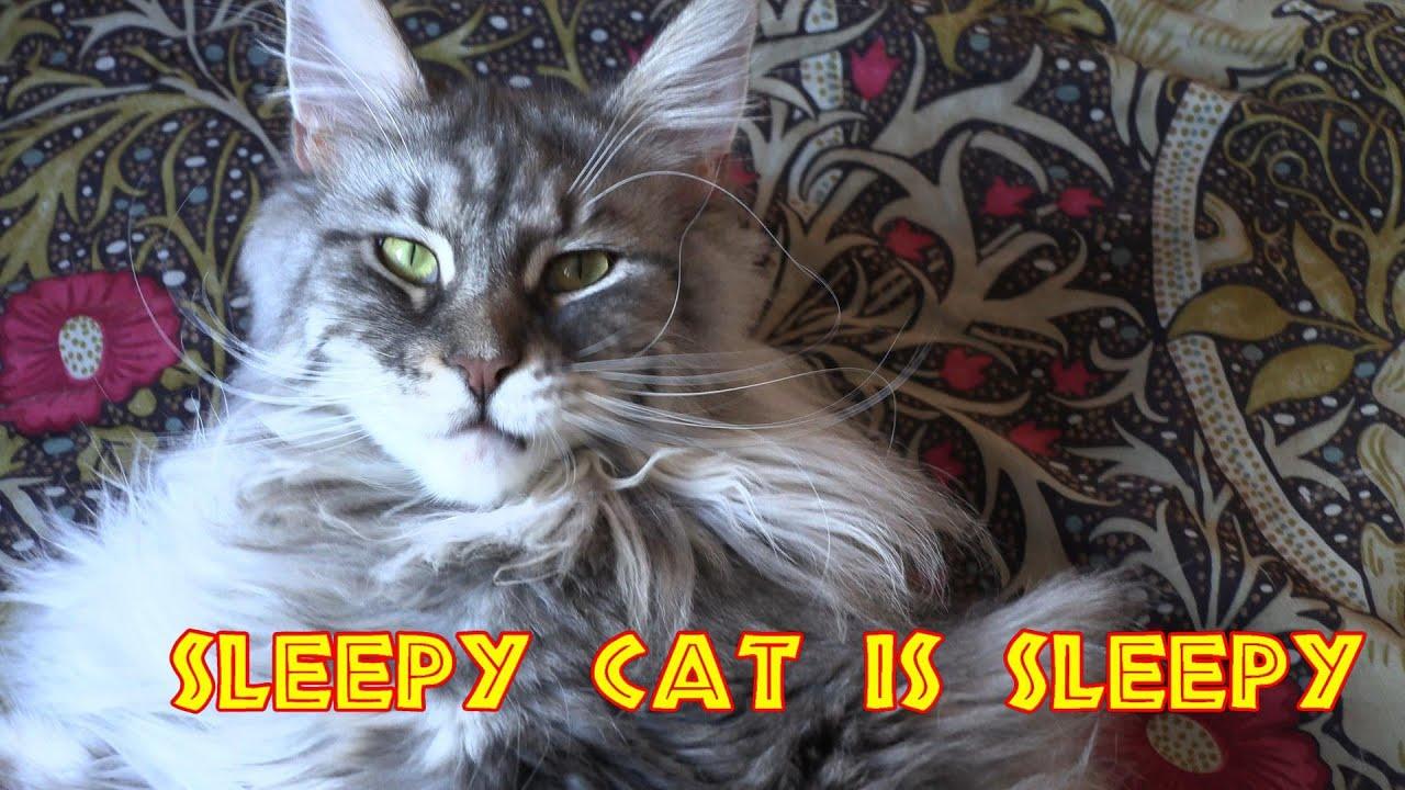 Sleepy Cat Is Sleepy