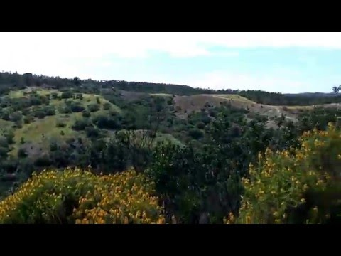 Vegan Hills