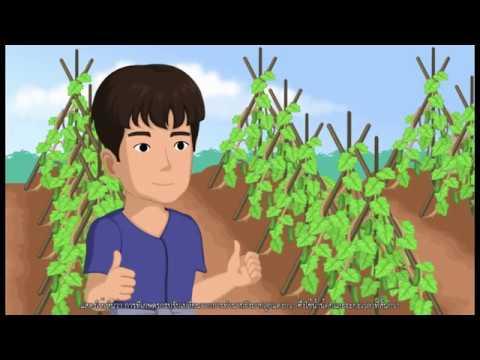 ปลูกพืชตามความเหมาะสมกับพื้นที่ (Zoning)