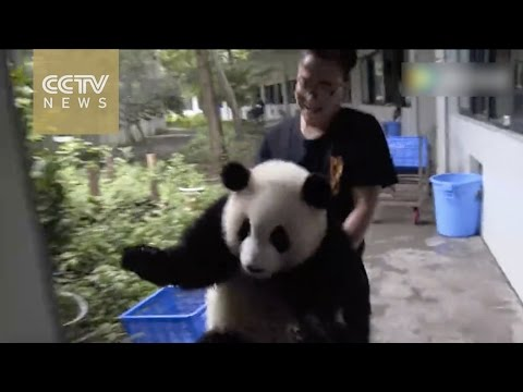 Cuteness overload: Conversation between panda and his keeper