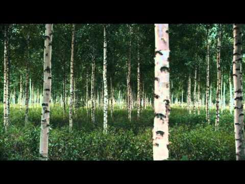 """""""UPM: Metsä jää jälkeesi"""""""