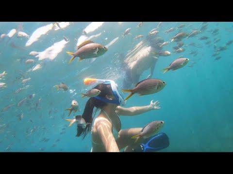 Dubai gateway /Fujairah Snoopy island snorkeling/ Sandy Beach Hotel