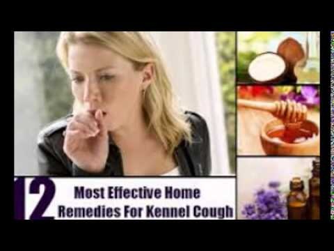 Home Remedy For Kennel Cough Youtube