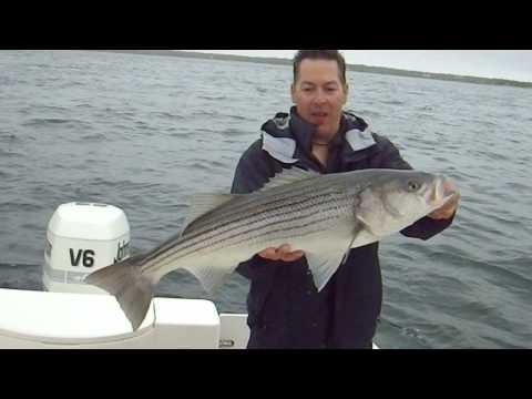 Barnstable Harbor Striper Fishing 2015