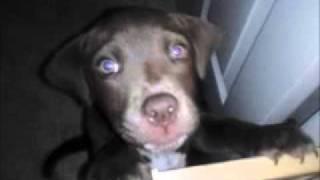 Blue Marley's Countdown to Bedrock Lawsuit 3