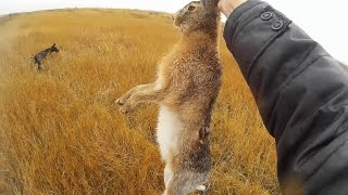 Охота на зайца в Украине