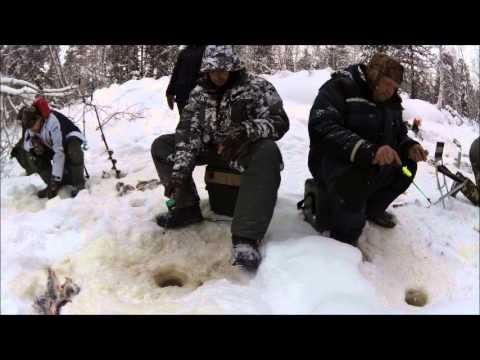 Зимняя рыбалка на Севере Оби. Фильм 4: третий день рыбалки. Окунь сошел с ума.
